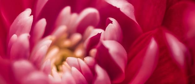 フローラ ブランディングと愛のコンセプト赤いデイジーの花の花びらが抽象的な花の花アートの背景に咲く春の自然の香り、結婚式の高級美容ブランドの休日のデザイン