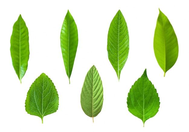 식물 여름 아름다운 나무 허브