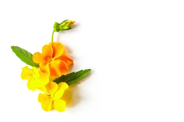 Цветочная композиция из распускающихся желтых цветов анютиных глазок с листьями и бутонами