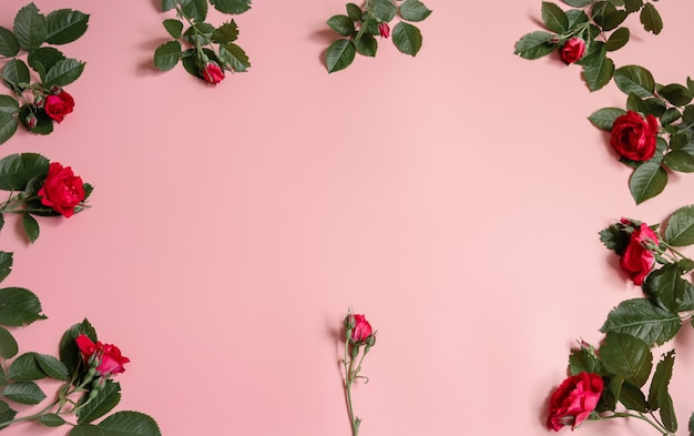 Floral arrangement with fresh natural roses on pink background copy space.