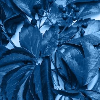 Цветочный фон синие листья и ягоды дикого винограда