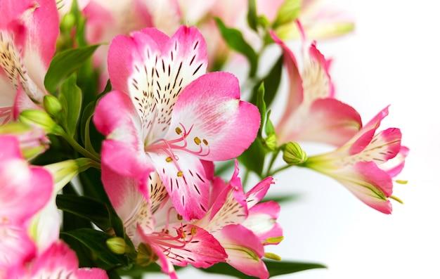花の背景。満開のアルストロメリアの花の花束。アルストロメリアのピンクの花
