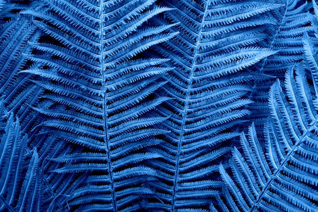 Floral background. glowing fern in neon trendy color classic blue. for lifestyle blog, social media. horizontal. concept color of the year 2020