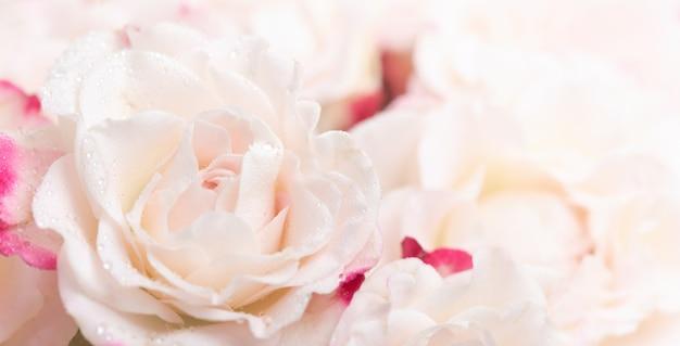 Цветочный фон. светло-розовые розы фон