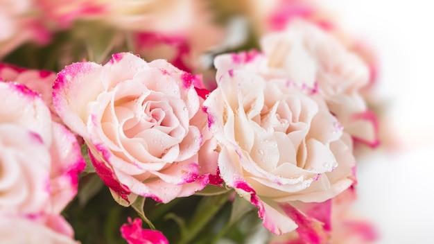 Цветочный фон. светло-розовые розы