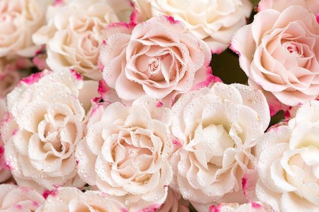 꽃 배경입니다. 라이트 핑크 장미