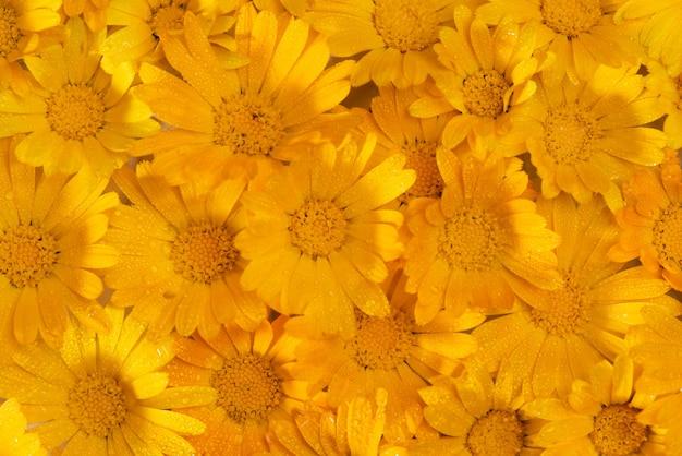 정원에 있는 금송화 꽃의 꽃 배경. 질감 배경입니다. 선택적 초점입니다.