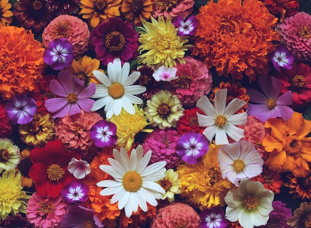 Floral background, top view. greeting card with garden flowers.