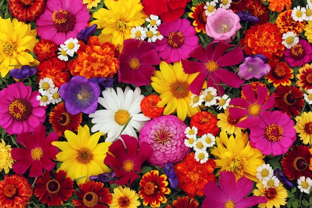 Floral background, top view. the texture of different garden flowers: pink and yellow.
