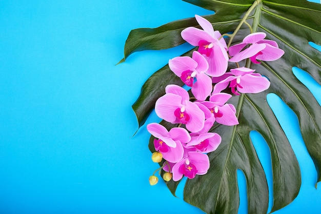 Floral background of tropical pink orchids with green tropical leaves on blue wall. copy space
