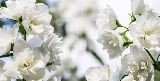 花の背景白いテリージャスミン花びらマクロ花の背景