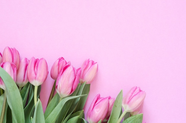 Floral background with tulips flowers.