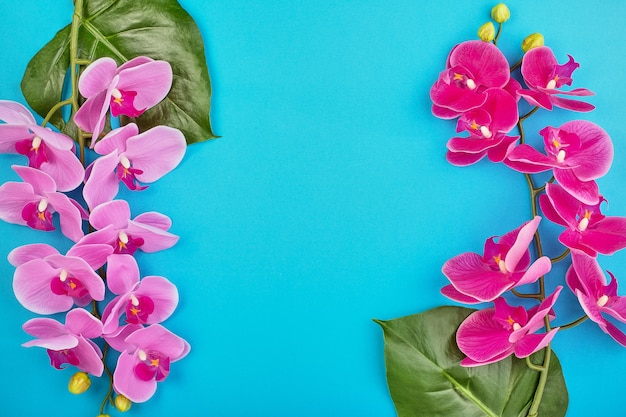 Floral backgroundtropical pink orchids on blue background. copy space