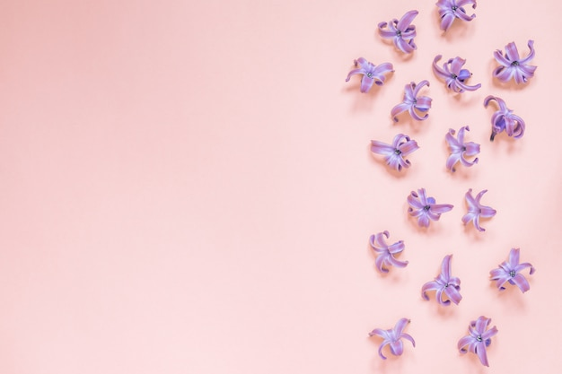 Floral beautiful pastel pink. purple small flowers of hyacinth. flat lay, top view, copy space