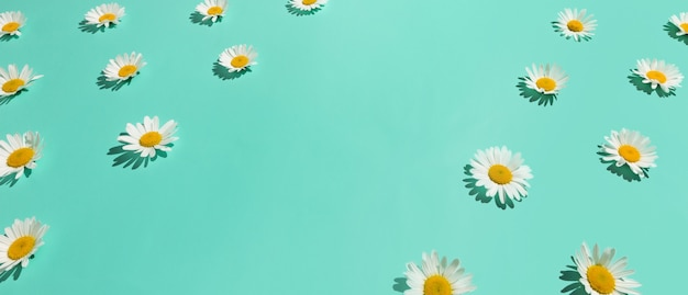 Floral border frame of many chamomile flowers on abstract bright mint green background. copy space. isometric view.
