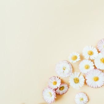 Цветочная композиция с бутонами ромашки на пастели