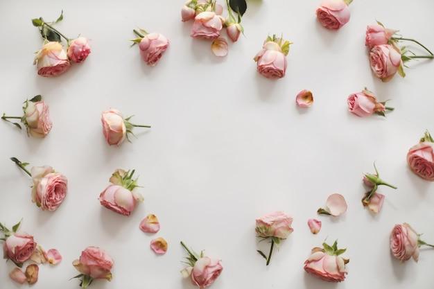 白のピンクのバラの花のフレームと花の構成