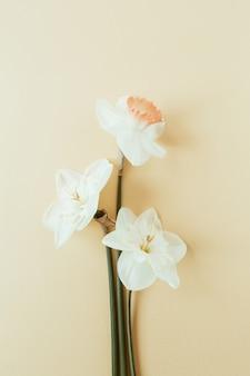 パステルに水仙の花と花の組成