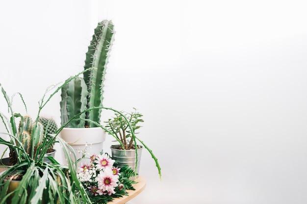 Composizione floreale con spazio a destra e cactus