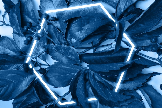 Цветочный творческий фон. синие листья и ягоды дикого винограда. стильная шестигранная рамка
