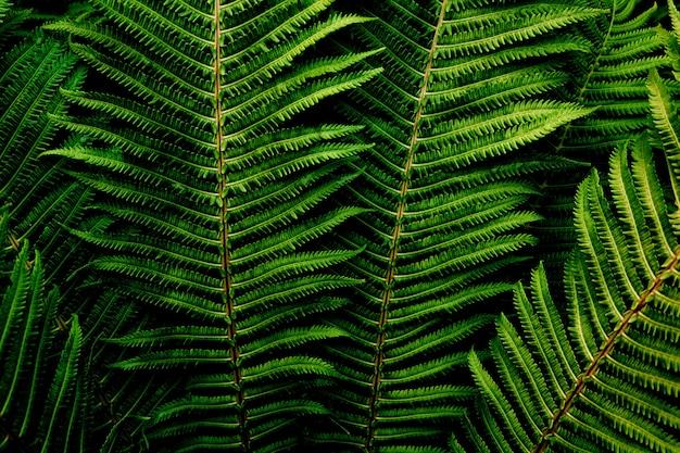 Floral dark green fern foliage.