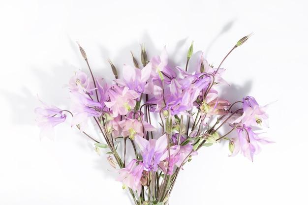 テキストや製品の花の繊細な背景、上面図。強い影と白い背景の上のピンクの野花アクイレギアの花束。国境。