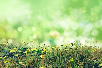 Floral design with bokeh effect