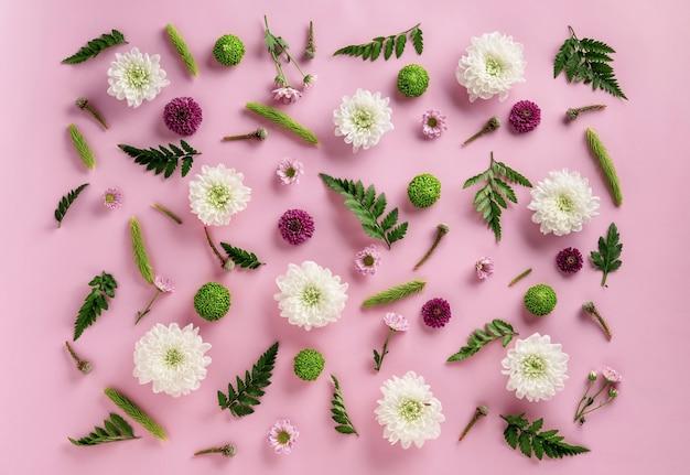 フローラルフラットレイ。ピンクの背景に分離された色とりどりの花菊と葉シダの構成。菊の花の夏の花の背景。