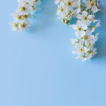 흰 꽃의 꽃 프레임입니다. 블루 테이블에 피 새 체리입니다. 위에서보기, 평평한 평신도 스타일, 텍스트 및 제품을위한 공간 복사.