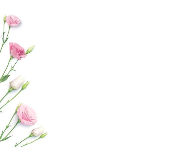 Цветочная рамка или граница из цветов эустомы, изолированные на белом фоне.
