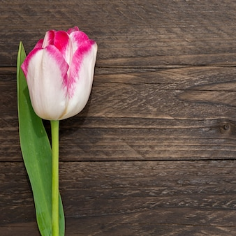 Цветочная рамка с розовым и белым тюльпаном