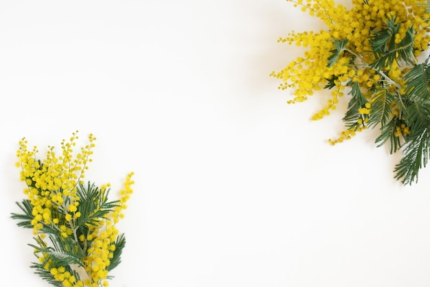 Floral frame of yellow mimosa branches on white background. flat lay, top view.