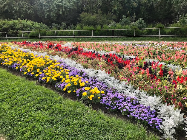 Floral long beds with colorful flowers in the park on a summer sunny warm day.