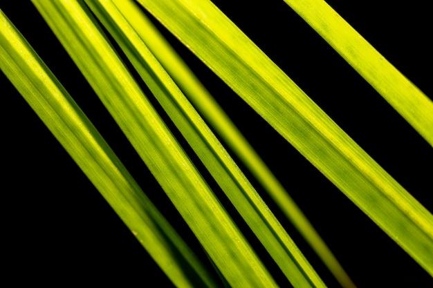 花のマクロ写真。緑のヤシのクローズアップの部分は黒い背景に残します。セレクティブフォーカス。