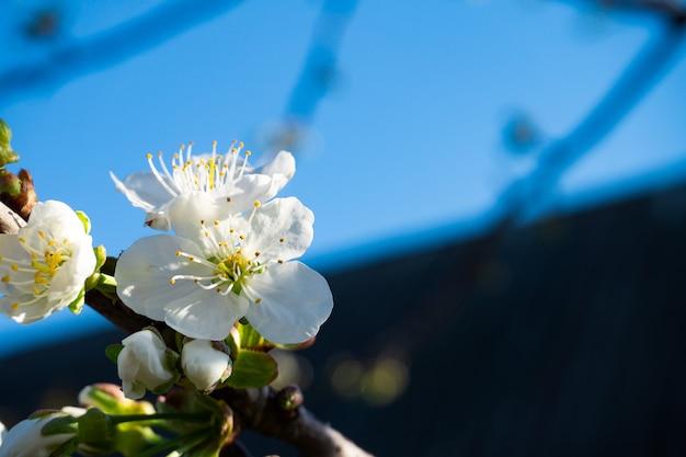 花の自然な背景の春の時期。