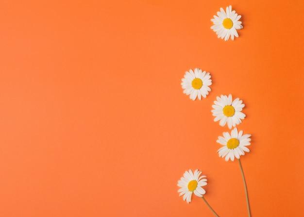 Цветочный оранжевый фон с ромашками