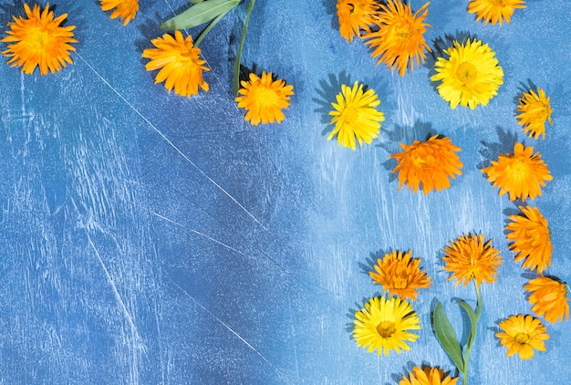 Floral pattern of calendula flowers on blue
