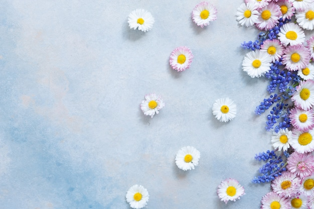 Floral pattern frame of daisies and muscari