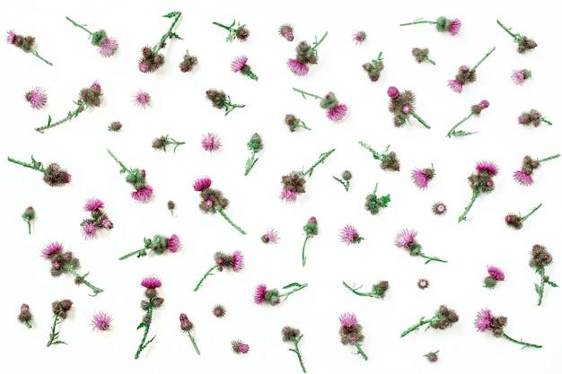Цветочный узор из расторопши с розовыми и фиолетовыми цветами и шипами на белом