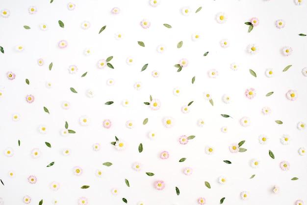 Цветочный узор из белых и розовых цветов ромашки ромашки, зеленые листья на белом