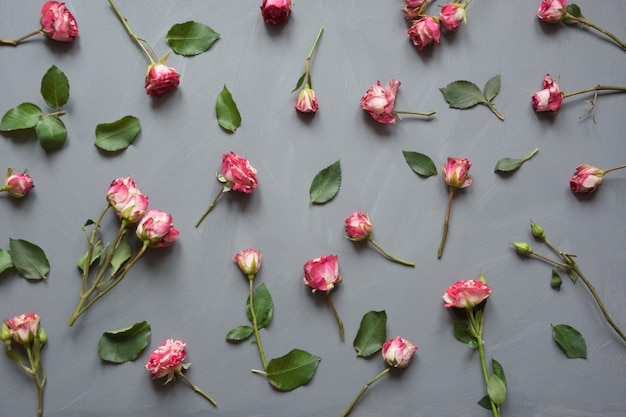 Floral pattern made of pink bush roses, green leaves on gray