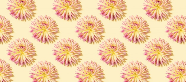 Floral pattern made of pink dahlia flowers on pastel yellow background