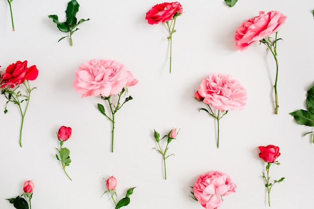 Floral pattern made of pink and red roses, green leaves, branches on white background. flat lay, top view. floral background