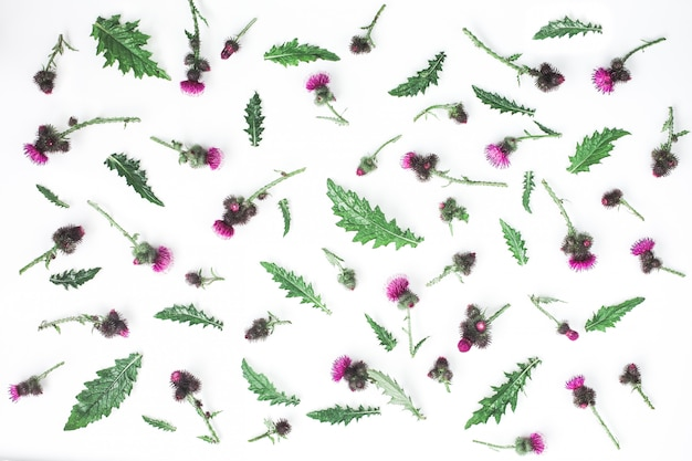 Floral pattern made of thistle with pink and purple flowers