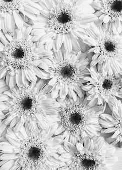 Floral pattern made of white chamomile daisy flowers. flat lay, top view