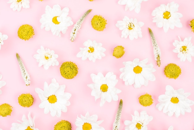 Floral pattern made with white and yellow flowers on pink background