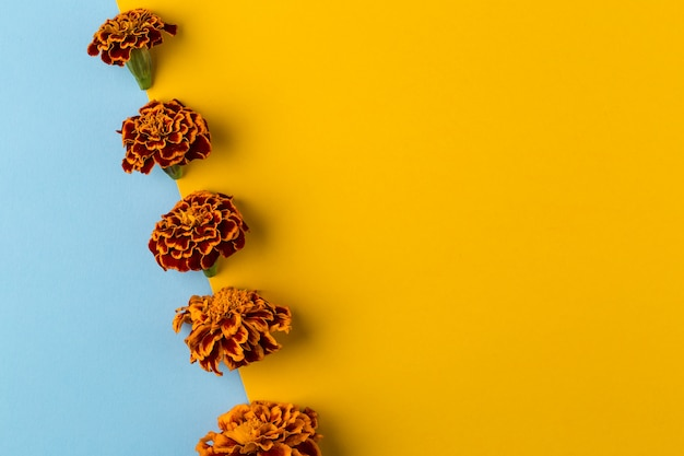 Floral pattern of marigold flowers on the blue and yellow