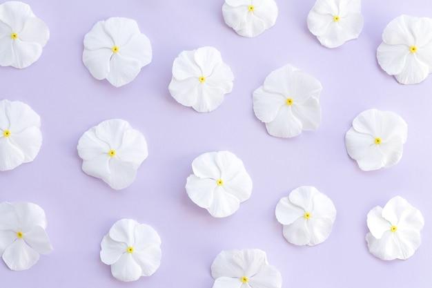 흰색 catharanthus 꽃의 꽃 패턴입니다. 꽃 봉오리의 배경입니다. 평평한 평면도.
