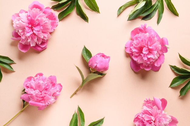 Floral pattern of pink peony flowers on beige background greeting card for th march or mother day