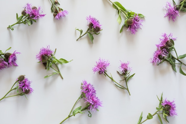 Floral pattern of purple and pink flowers. flat lay. view from above.